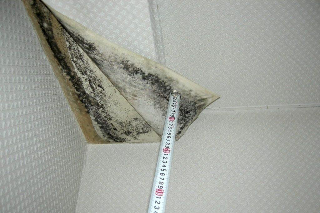 壁紙の下がカビ