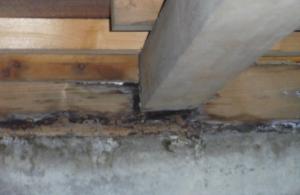 一戸建て_屋根裏や床下