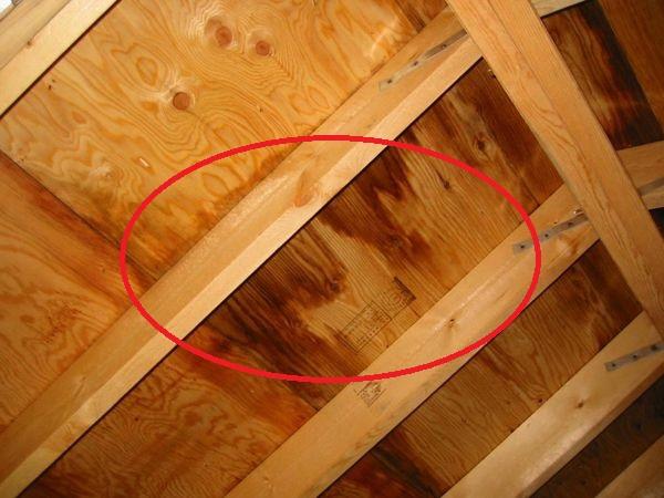一戸建ては要注意!雨漏りだけじゃない、台風の二次被害